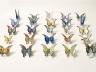 Butterfly - Nardy